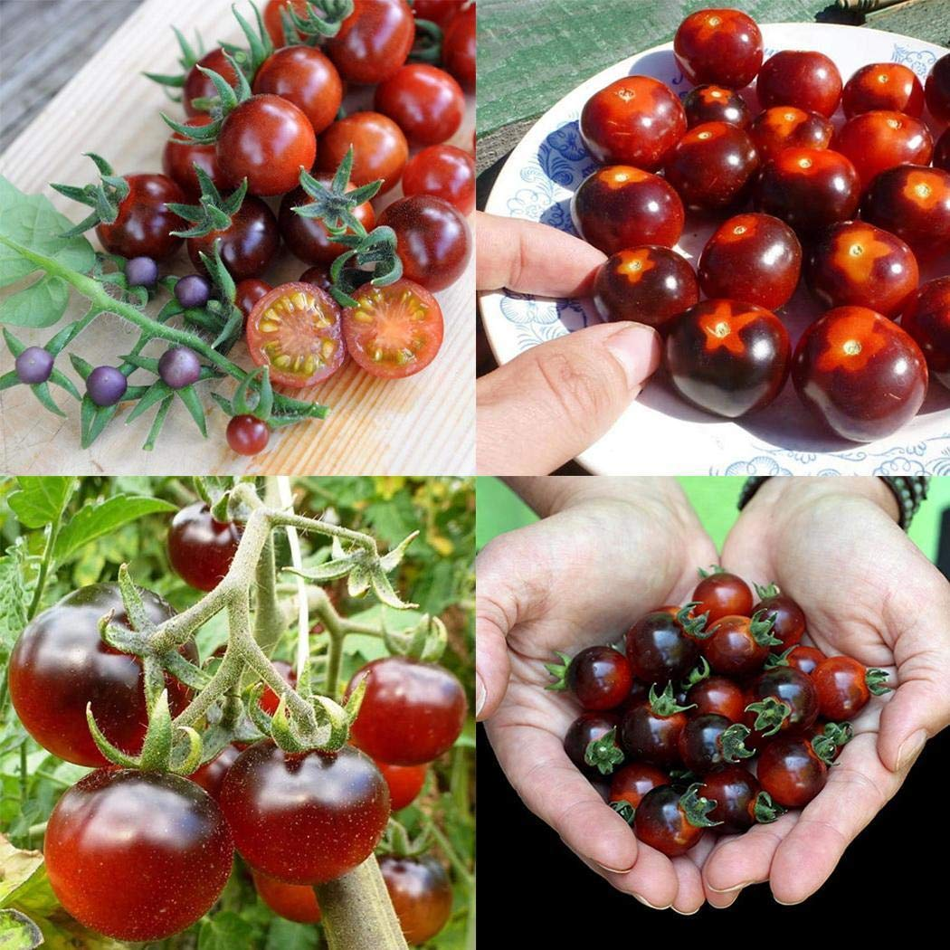 weihill Annual Bonsai Mini Cherry Tomato Seeds Bonsai Outdoor Plant Seeds Flowers