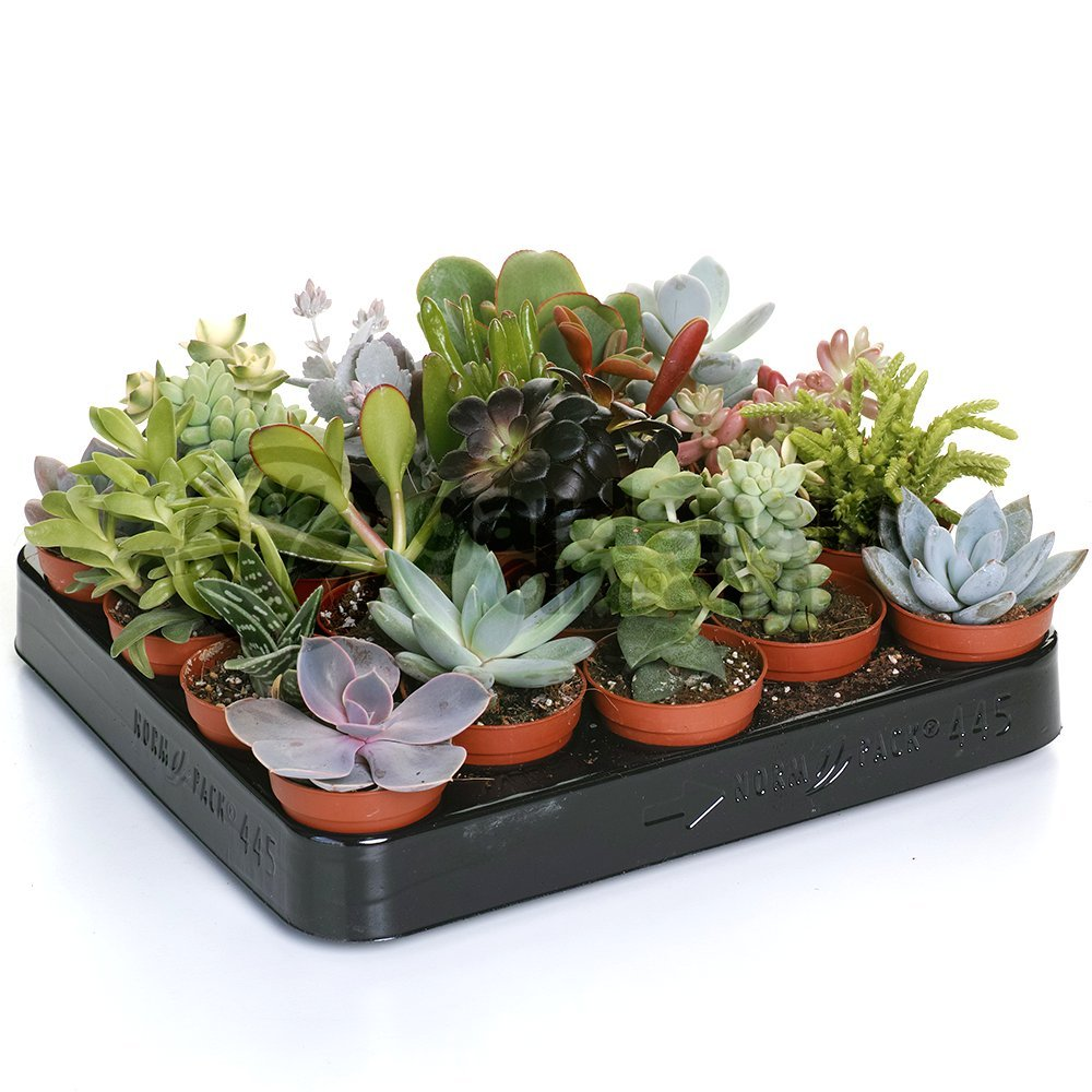 20 Plants – House/Office Live Indoor Pot Plant
