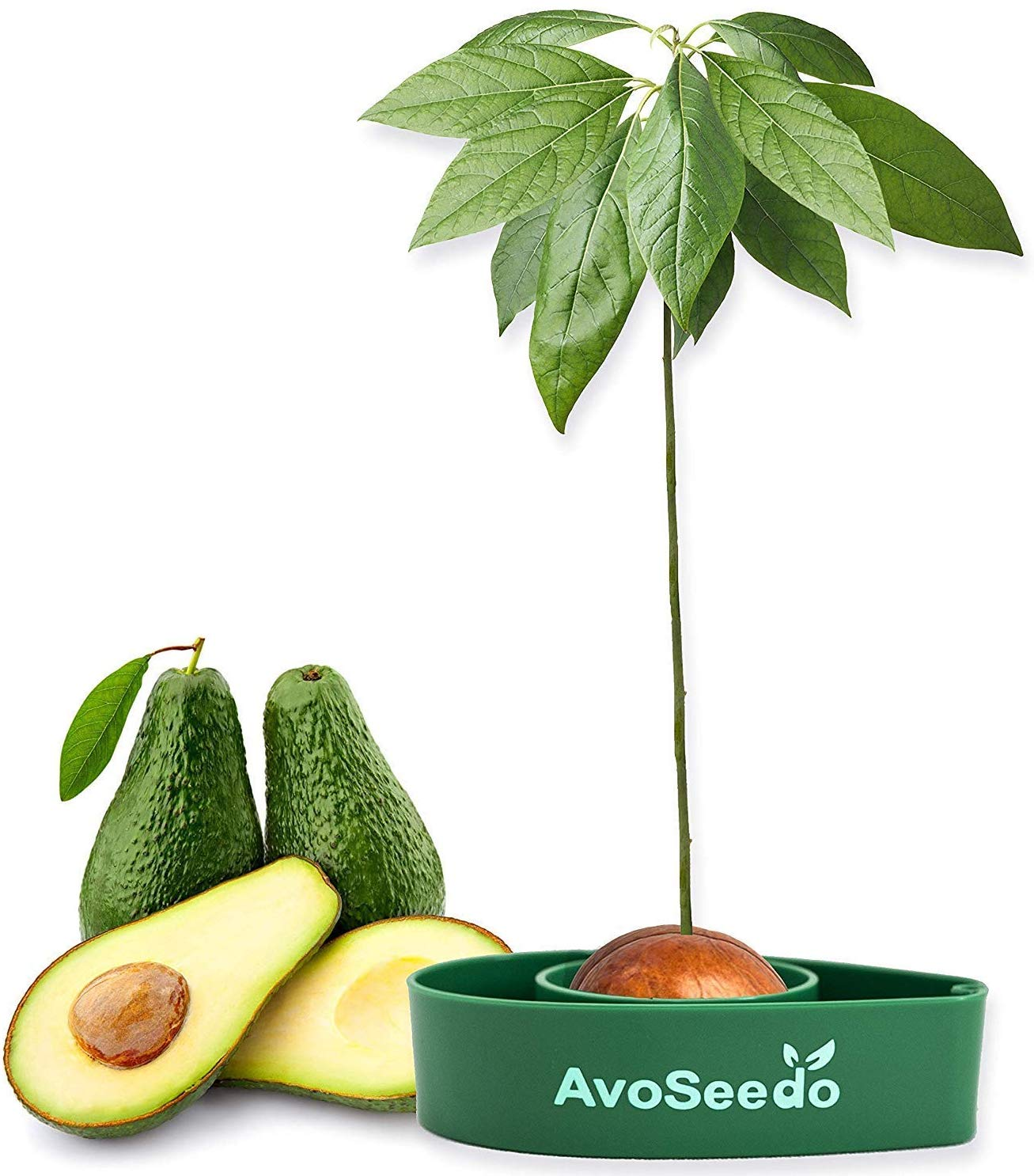 Grow Your Own Avocado Tree £11.99