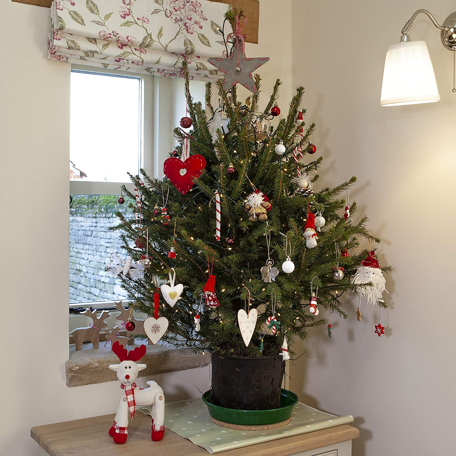 Pot Grown Norway Spruce Living Christmas Tree